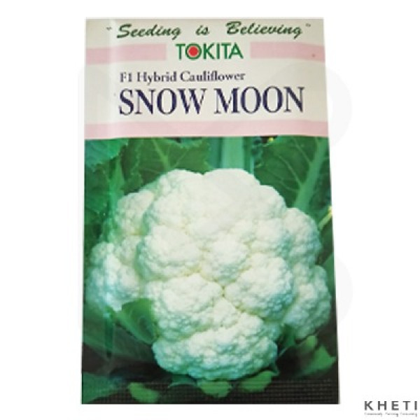 F1 Hybrid Cauliflower_SnowMoon_KJ (Fulkopi ko biu)